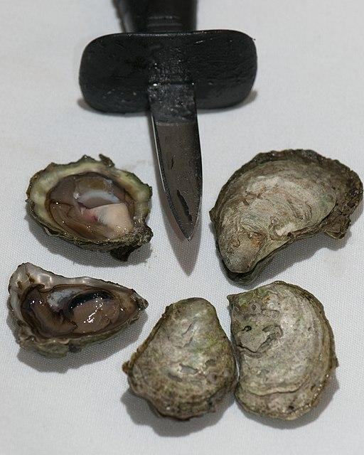 image of an oyster knife with a short, thick blade
