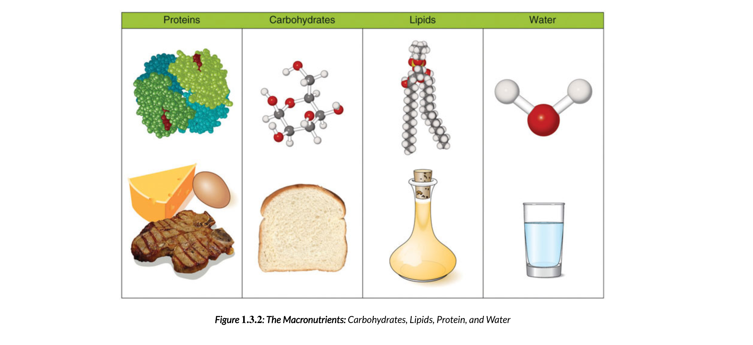 An image of a table containing Proteins, Carbohydrates, Lipids, and water displayed at the molecular level; with examples of a source for that nutrient below the molecule. Steak is the protein example, bread is the carbohydrate example, a flask with a yellow liquid is the lipid example, and a glass of water is the water example. The carbon structure of 1 molecule for the nutrient is shown above the example.