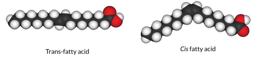 An illustration of trans-fatty acids, and cis fatty acids in molecular form