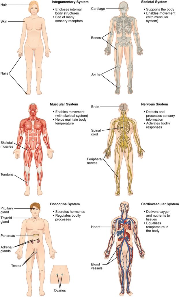 Six Body systems