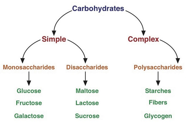 A hierarchy of nutrients that stem from carbohydrates