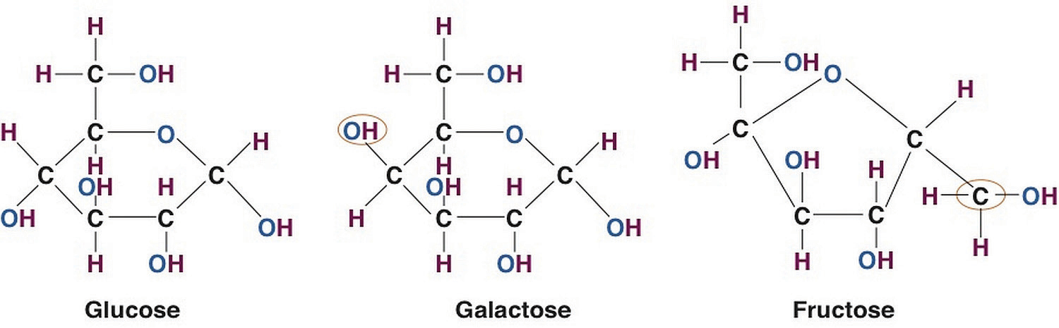An image that shows the molecular structures for Glucose, Galactose, and Fructose