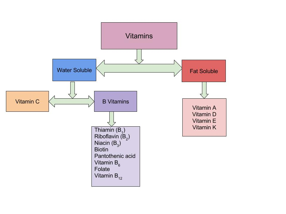 A flow chart of water soluble and fat soluble nutrients and what they get broken down into from vitamins.