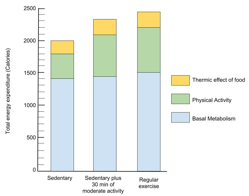 Graph shows energy expenditure versus 3 types of physical activity.