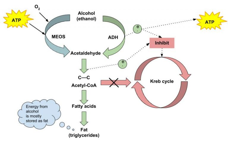 Alcohol metabolism summary illustrated chart