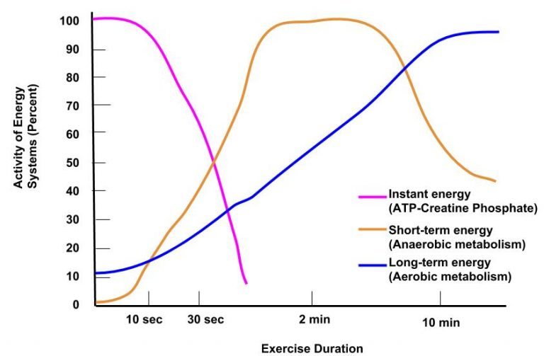 Graph of Exercise Duration, x axis, versus Activity of Energy Systems, y axis.