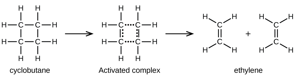 """In this figure, structural formulas are used to illustrate a chemical reaction, including an intermediate step. On the left, a structural formula for cyclobutane is shown. This structure is composed of 4 C atoms connected with single bonds in a square shape. Each C atom is bonded to two other C atoms in the structure, leaving two bonds for H atoms pointing outward above, below, left, and right. This structure is labeled, """"Cyclohexane."""" An arrow points right to a similar structure which has the upper and lower bonds replaced by rows of 4 dots. Similarly, columns of 3 dots appear just inside the line segments indicating the vertically oriented single bonds in the structure. The label """"Activated complex"""" appears beneath this structure. A second arrow points right to two identical ethane molecules with a plus symbol between them. Each of these molecules contains two C atoms connected with a double bond oriented vertically between them. The C atom at the top of these molecules has H atoms bonded above to the right and left. Similarly, the lower C atom has two H atoms bonded below to the right and left. Below these two molecules appears the label """"Ethylene."""""""